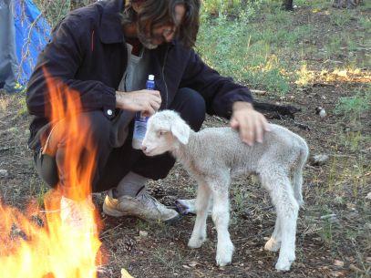 Steve and lamb