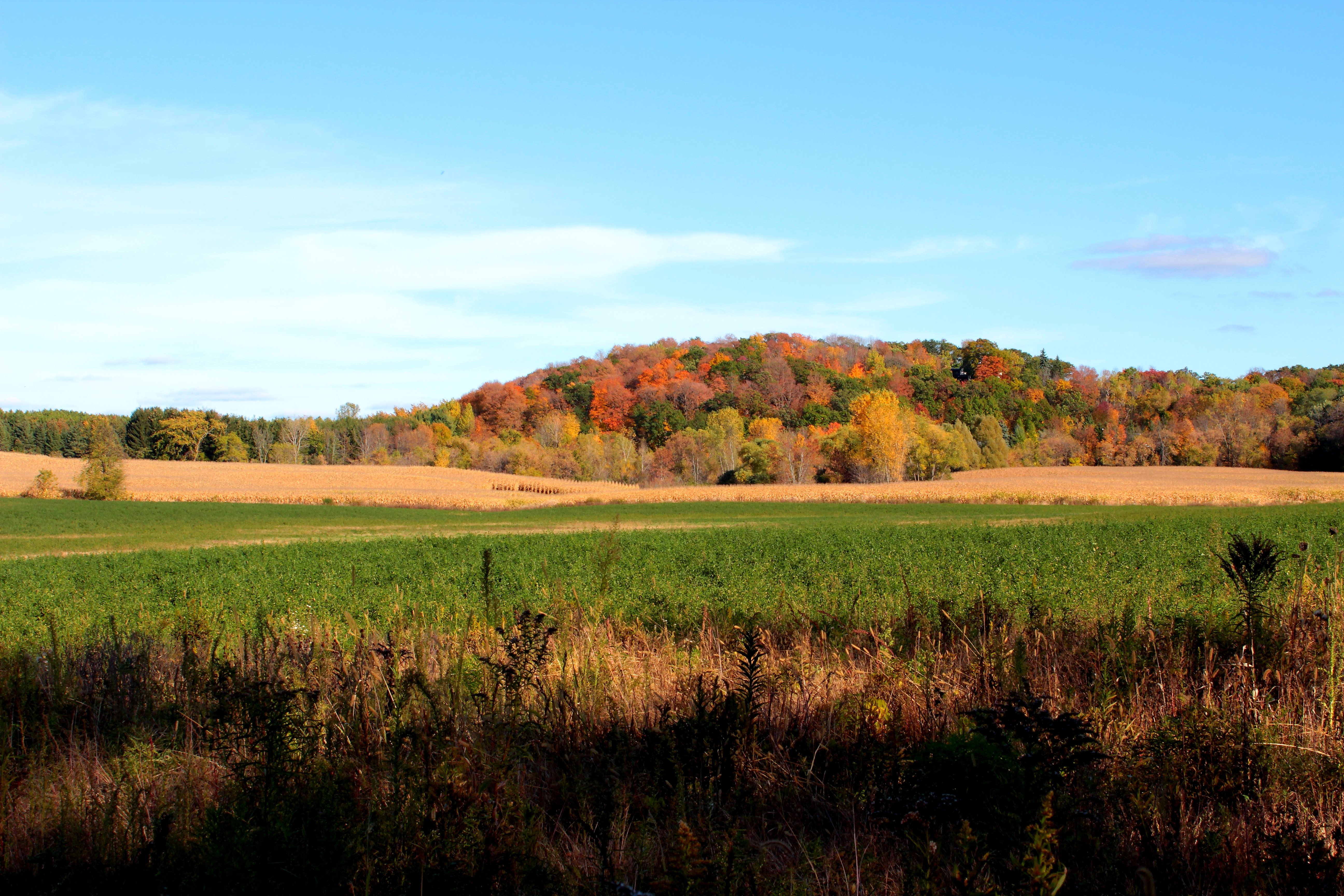 Wisconsin horizon