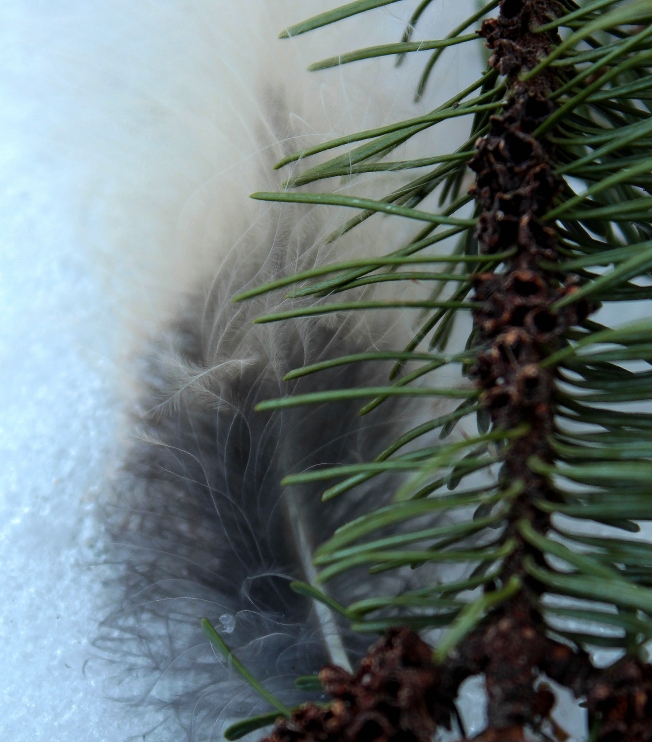 prickly feathery cold