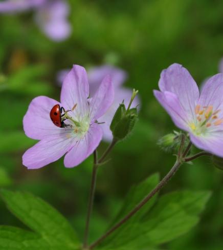 summer flowers 4