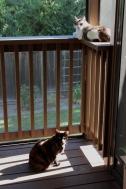 Titania and Portia on the porch