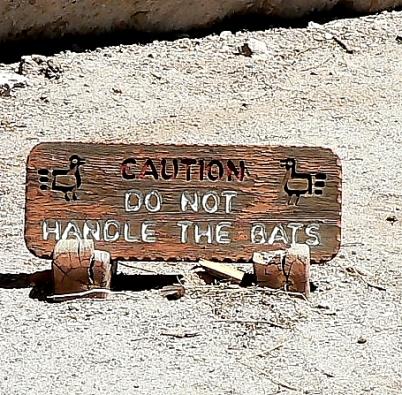 handling bats