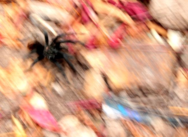 spider blur