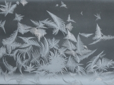 feathery frost