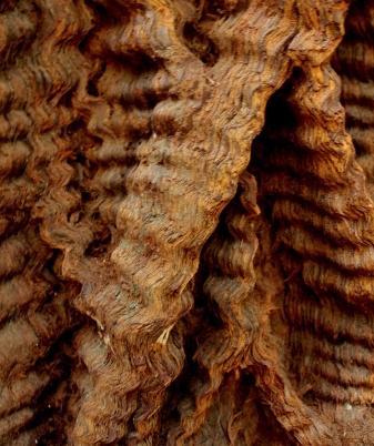 mono redwood