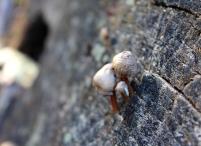 mushroomlet