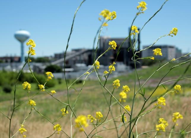 MKE flower industry