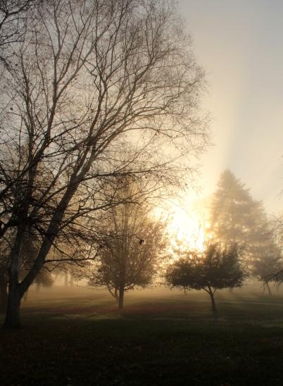 magic-mist