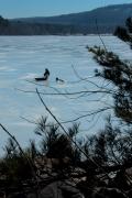 ice-solitude