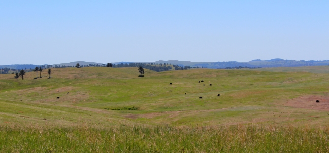 sparse herd