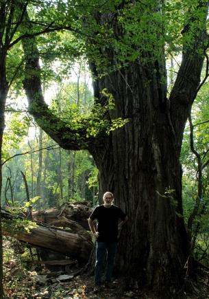 Giant cottonwood
