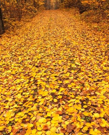 joyce path