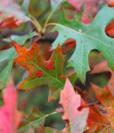 lake emily leaves