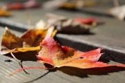 lost 40 leaf