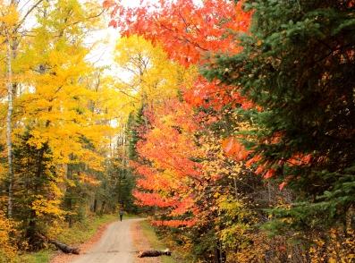 walking man in fall