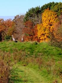 autumn cranes