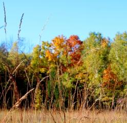 autumn fox hill