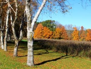 autumn line up