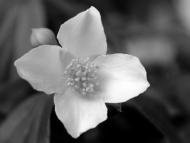 mono flower 3