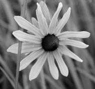mono flower 4