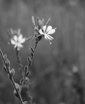 monochrome flower