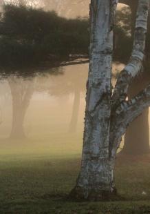 foggy depth