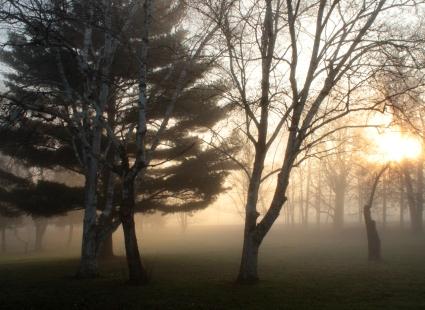 foggy fantasy